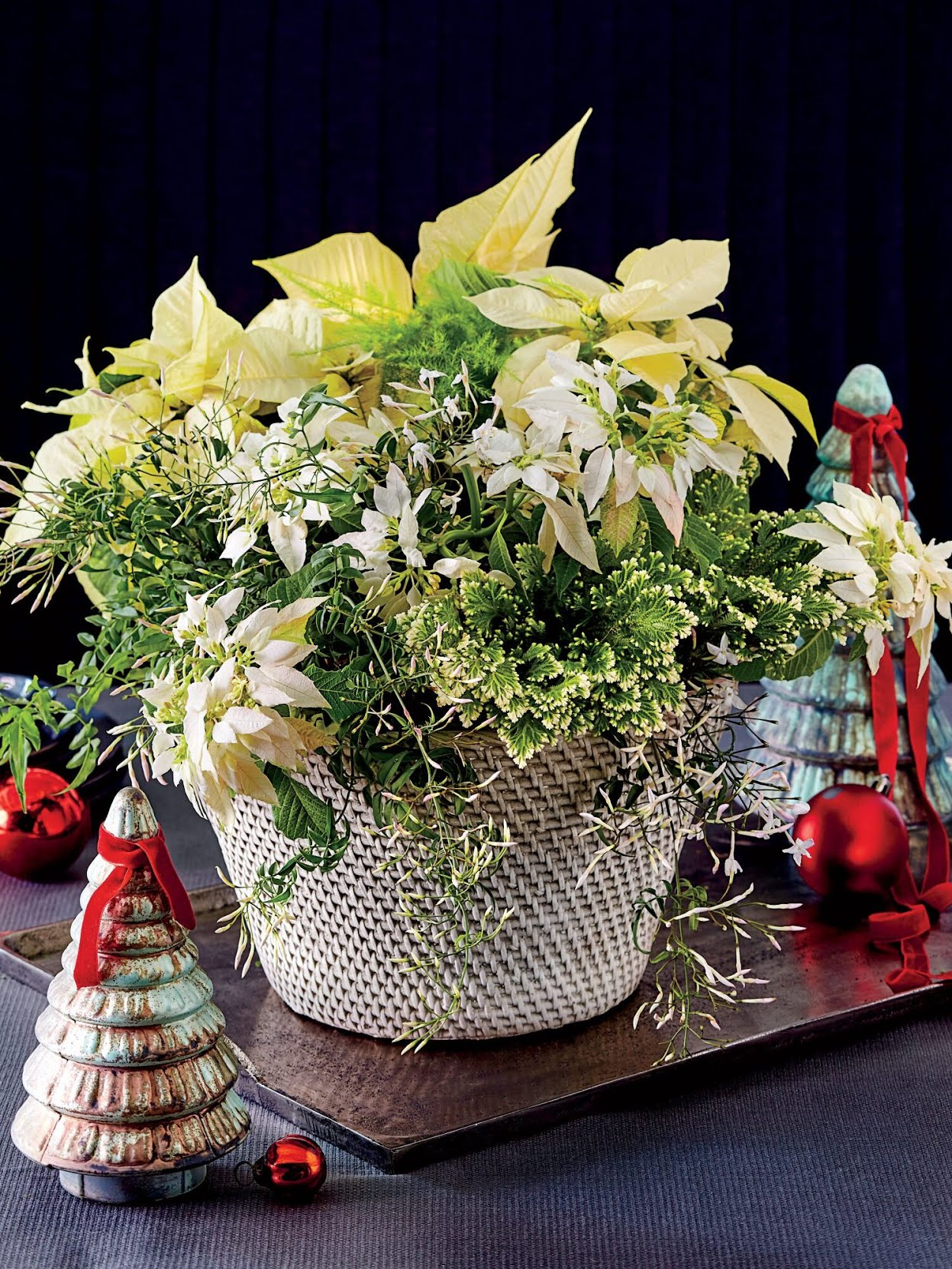 White Poinsettia Potted Arrangement